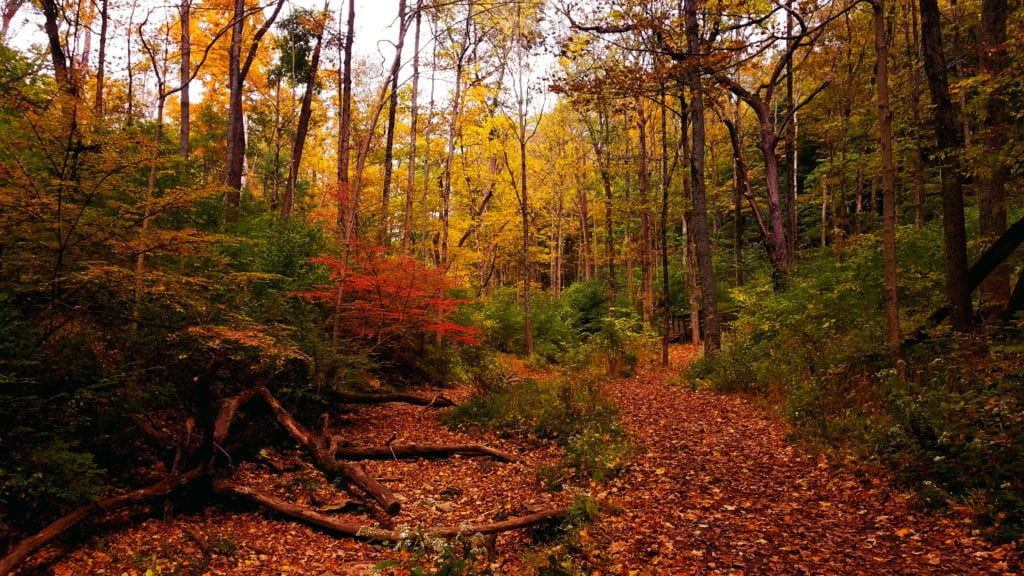 Fall Leaves in Mt. Airy Forest