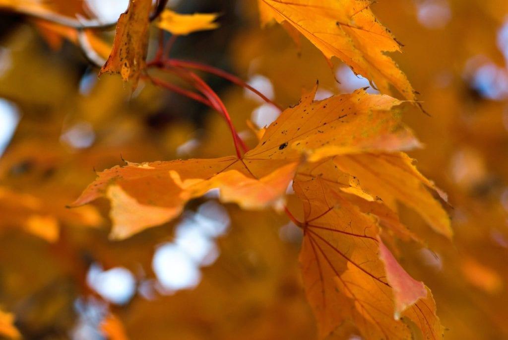 Fall Leaves - LeafGuard
