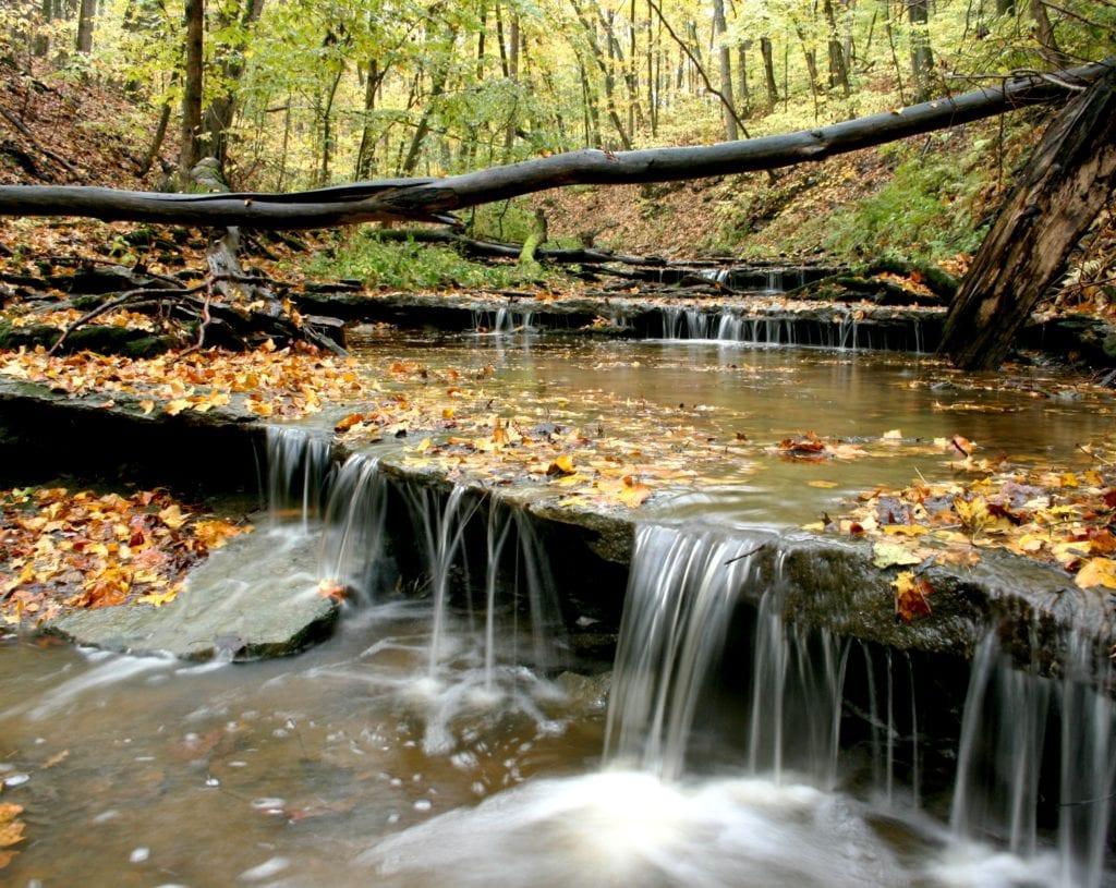East Fork State Park - Mark Birkle - Fall Leaves Cincinnati