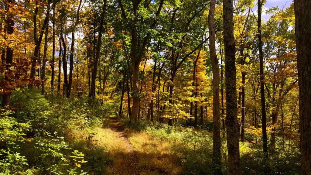 Fall Leaves in Mt. Airy Forest, Cincinnati