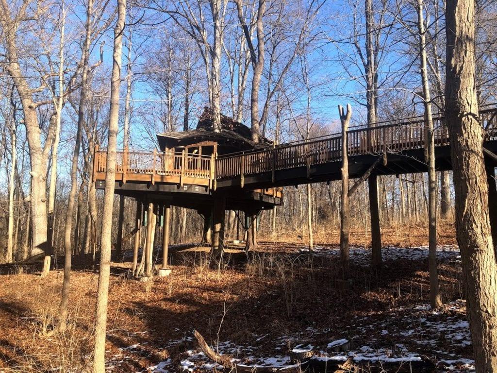 Everybody's Treehouse Cincinnati - Marisa Huncherick - Fall Leaves Cincinnati